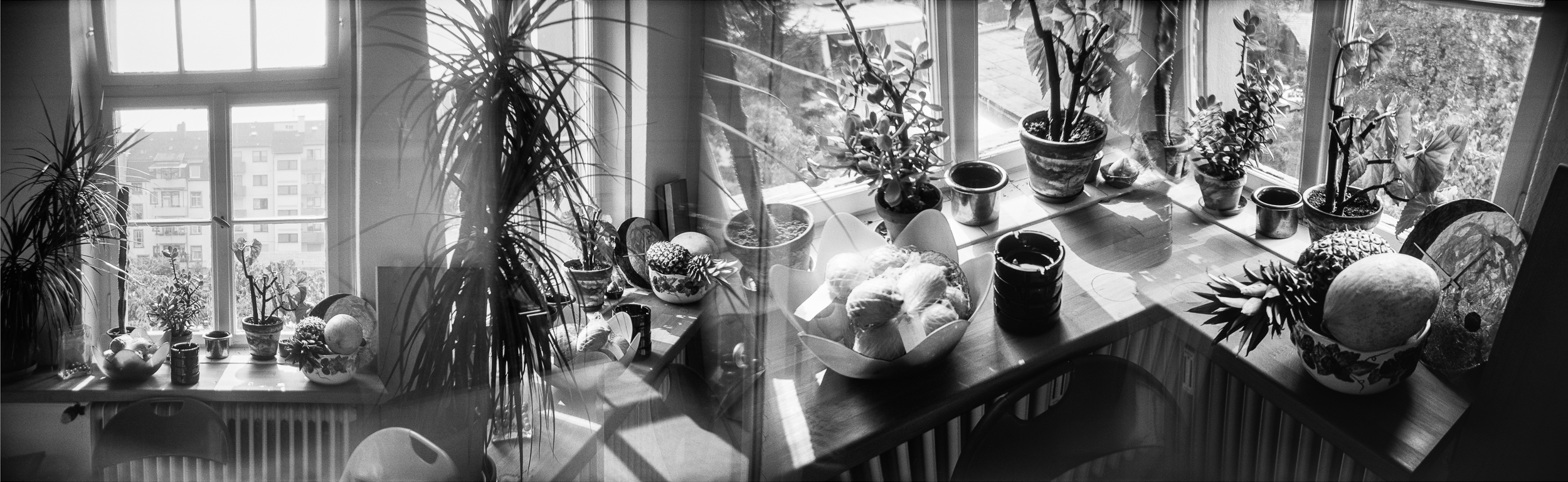 Black and white photograph of succulents in a minimalist style kitchen using house plants for interior decoration. The family Cactaceae in Karlsruhe, Germany.  Series entitled Lieux-dits by Elise Prudhomme.